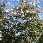 Flores del Parque de Los Pinos en Primavera