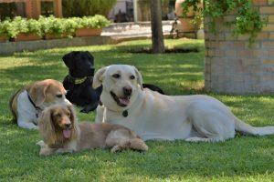 Foto muy bonita de mi Luna y Lola con otros amigos en la parcela.